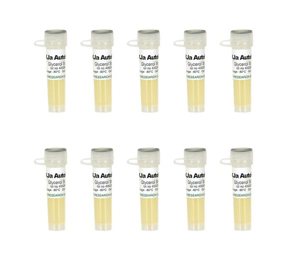 Mix & Go! XJa (DE3) Autolysis Competent Cells